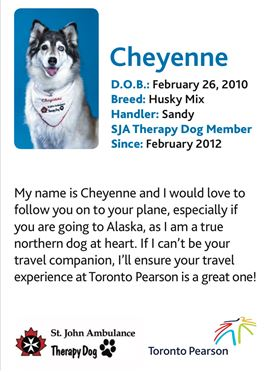 Cheyenne, therapy dog